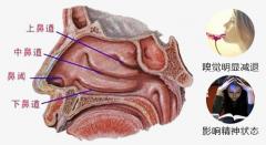 鼻甲肥大常见的症状有哪些